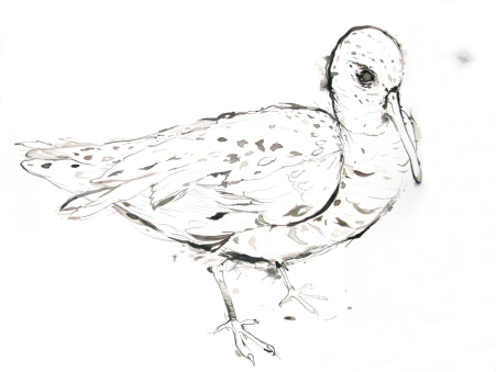 Iron Cove Man Bird, 2005, ink on paper, 59 x 84 cm